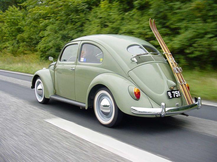 Старый жук